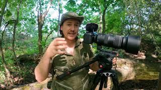 7 ошибок при видеосъемке птиц и других животных